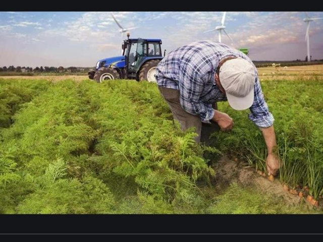 Turkey's climate problem hits agriculture hard