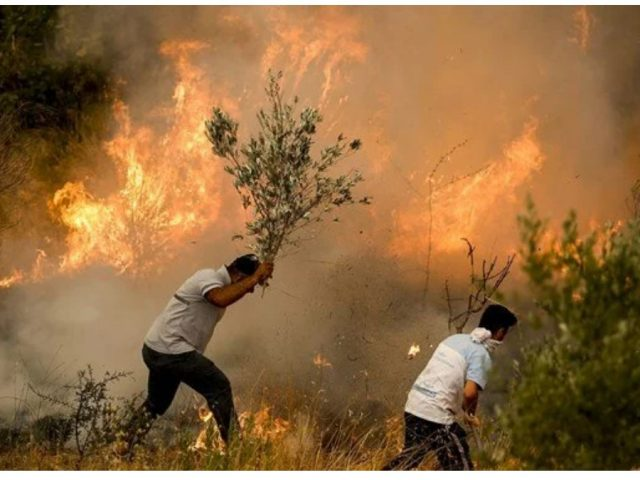 Wildfires continue in Turkey: Tourists were evacuated with rescue boats